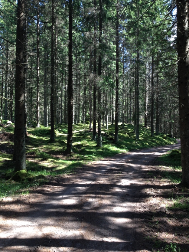 Stenkullen, skog 2015
