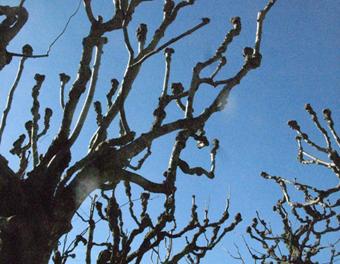 Gunnebo träd